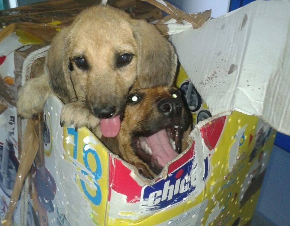 Cani dentro uno scatolone abbandonati davanti il rifugio di Vasto